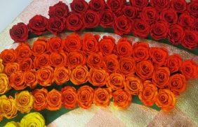 Rose Preservate