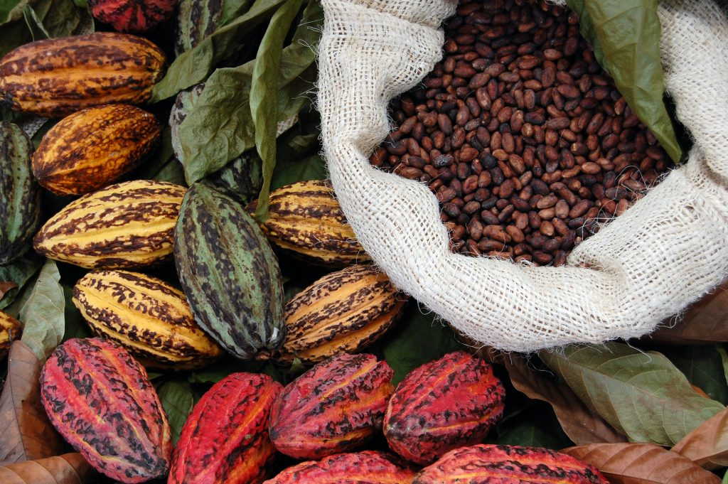 meraviglie del cacao