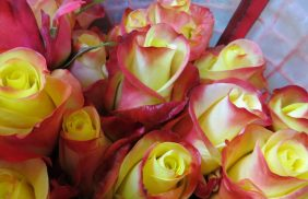 IMG_2631_rose_arancia_packaging_cono