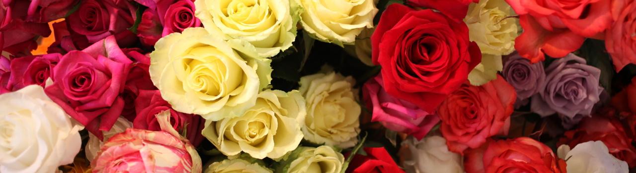 fiori ogni giorno