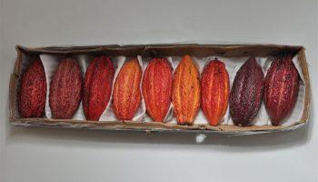 Accessori Cacao