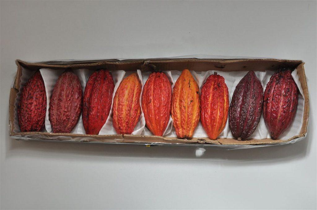 Accessori Cacao title=Accessori Cacao