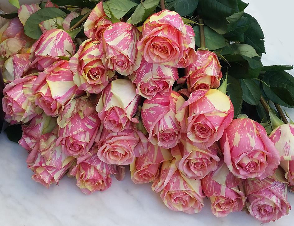 Rose Ecuador