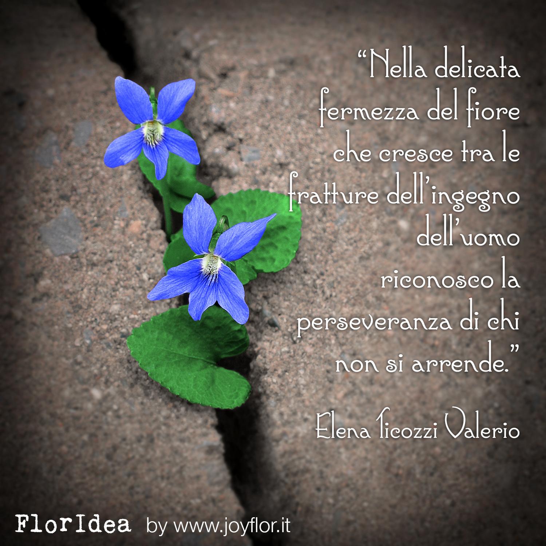 floridea-elena