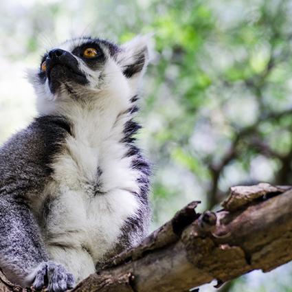 Origine Madagascar